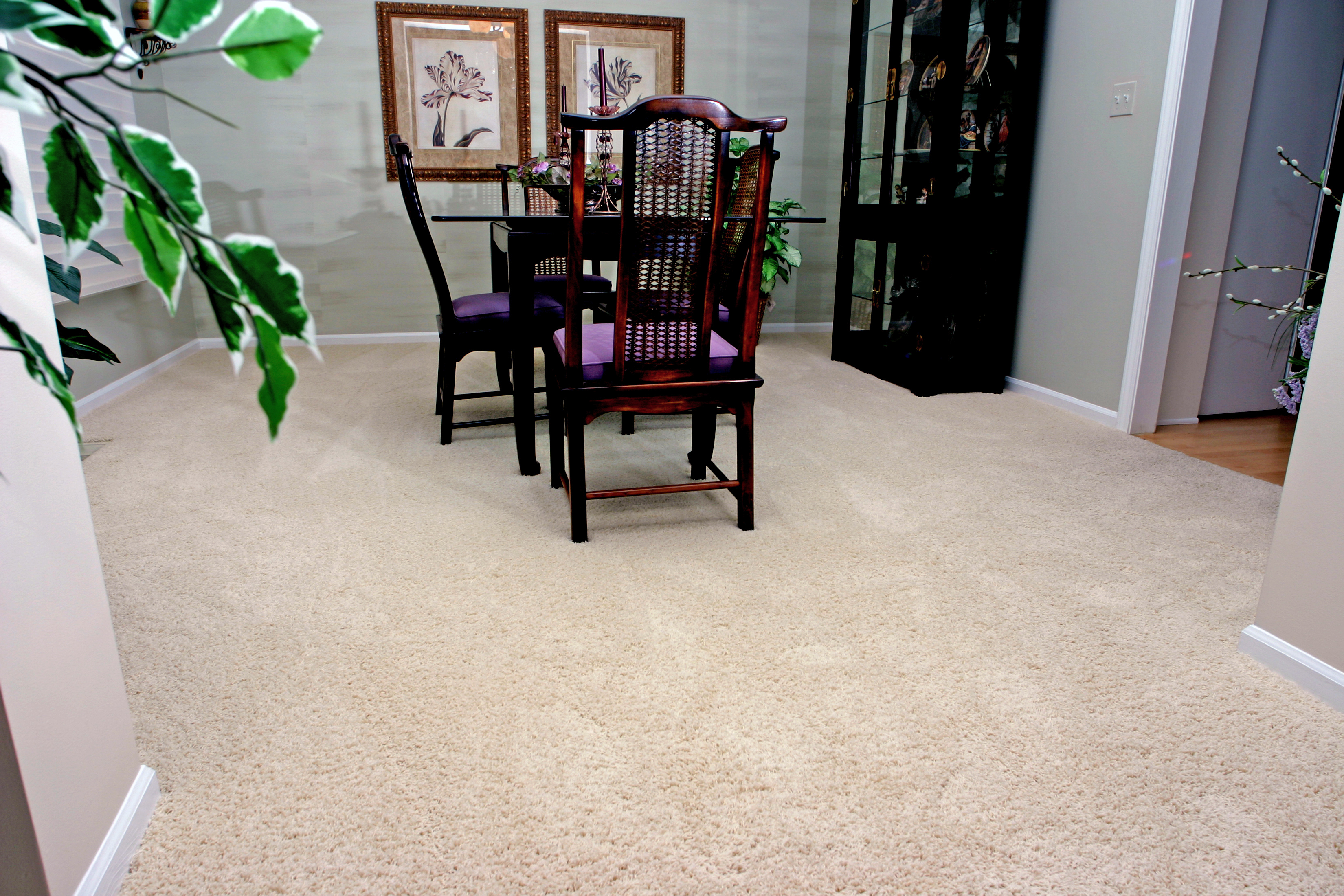 Best Carpets That Hide Stains and Footprints | Empire Today Blog